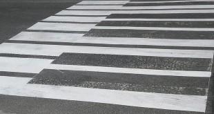 nietypowa zebra